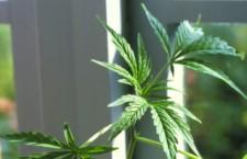 Depenalizzare cannabis e immigrazione