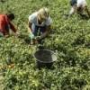 Foggia. Manifestazione dei braccianti agricoli contro sfruttamento e razzismo