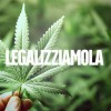 Cannabis: se la coltivi vai in galera, non se la compri dalle mafie