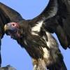 Ultimo assalto alle pensioni, da dare in pasto agli avvoltoi