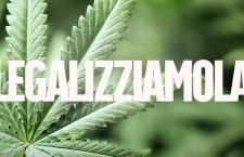 """Cannabis, sondaggio Coldiretti: """"Il 64% degli italiani sono favorevoli alla coltivazione libera"""". Diecimila i nuovi posti di lavoro"""