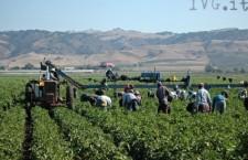 Sulla pelle degli immigrati: il sommerso in agricoltura
