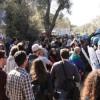 """Solidarietà con il """"popolo degli ulivi"""": migliaia di firme"""