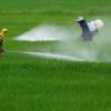 Il rapporto ISPRA ci dice che non sono acque dolci, acque chiare.