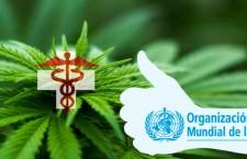 L'Organizzazione Mondiale della Sanità ha deciso: la cannabis è una medicina