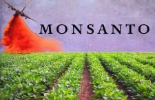 News Monsanto ha speso 17 milioni di dollari per influenzare stampa e esperti sul glifosato