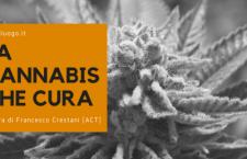 La cannabis che cura