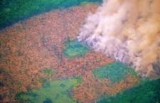 """Amazzonia, ecco come il made in Italy """"spinge"""" la deforestazione"""