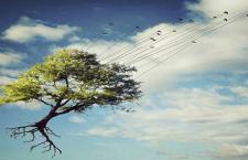 L'albero dei sepolcri imbiancati (La Stampa e il TAV)