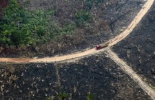 L'Amazzonia brucia anche per produrre la carne che mangiamo