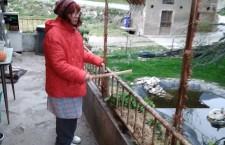 """Nicoletta Dosio isolata ai domiciliari fa la battitura """"libertà per le detenute e i detenuti"""""""