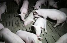 Lettera alla Rai delle associazioni animaliste e ambientaliste