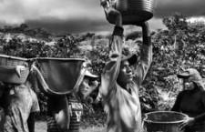 Valle della gomma: il lavoro delle donne vale 150 euro al mese