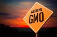 Le associazioni: «Il governo approfitta del momento per introdurre la coltivazione degli ogm in Italia»
