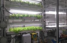 L'agricoltura dei giganti tecnologici