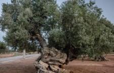 Puglia, 85 associazioni chiedono stop all'ecocidio