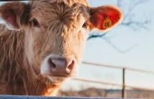 """Greenpeace: """"Così la Ue promuove il consumo di carne a scapito di frutta e verdura"""""""