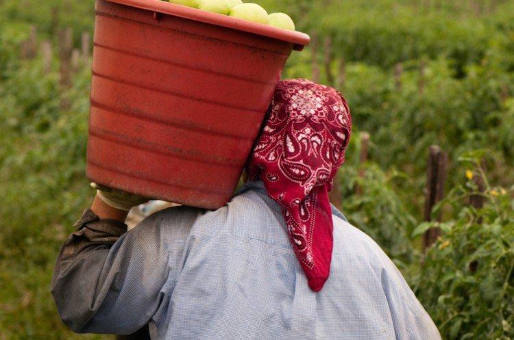 caporalato-agricoltura-stranieri-750x497