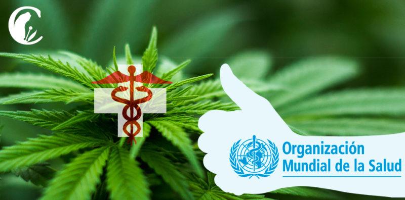 cannabis ONU